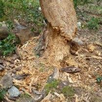 2014 04 14 Pico Cebollera (56)
